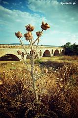 Farsala (kzappaster) Tags: bridge film river dof pentax greece agfa vivitar 100asa mesuper stonebridge vista100 19mm farsala thessaly kmount vivitar19mmf38 19mmf38 platinumheartaward enipeas