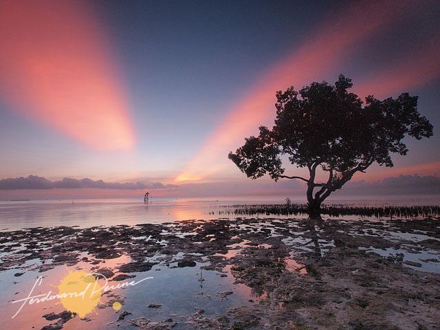 Mangrove Morning
