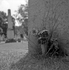 (andre dos santos) Tags: blackandwhite flower 120 6x6 tlr film cemetery graveyard rollei rolleiflex square lens reflex vermont tomb tombstone brandon twin s retro 80s squareformat medium format bouquet 80 vt schneider twinlensreflex kreuznach xenar f35 75mm mxevs rolleiretro80s rolleiretro80