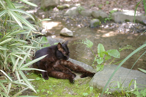 Today's Cat@2010-07-19