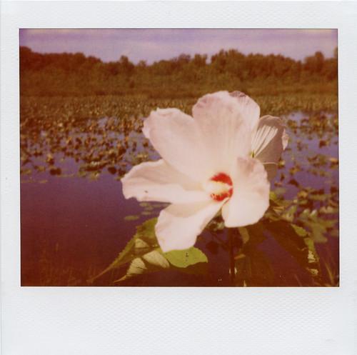refuge: flower