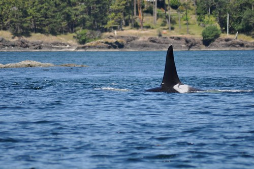 Whale Watching 17