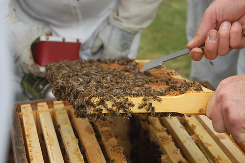Beekeeping Jul 10 5