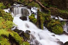 Oregon's Green-ness (Jared Ropelato) Tags: sky green nature water oregon canon landscape waterfall natural outdoor july lush 2010 multonomah columbiarivergeorge 5dmkii jaredropelato ropelatophotography