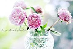 Peonies (Arpita Basu) Tags: uk pink summer stilllife flower green nature vintage nikon peony 50mmf14 d300s