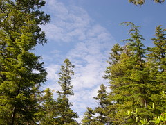 Clouds/trees on lower Tubal Cain trail.