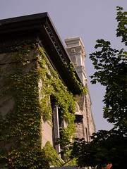 mq7000199.jpg (Keith Levit) Tags: windows chimney plants plant canada building window buildings photography vines exterior quebec montreal fineart vine vegetation growing exteriors levit faade keithlevit keithlevitphotography