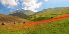 Monte Vettore (filippo rome) Tags: flowers italy colors italia poppies umbria castelluccio vettore fioritura montevettore