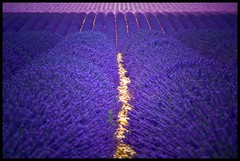 Provence - im Lavendel (NPPhotographie) Tags: france art nature magic creative lila magical oberberg lavande mywinners theunforgettablepictures vanagram bestcapturesaoi elitegalleryaoi provence2010 artistoftheyearlevel4
