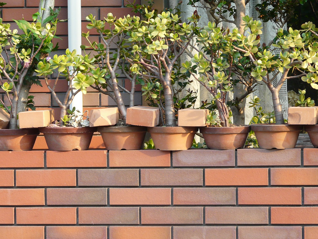 Potplants Secured with Bricks