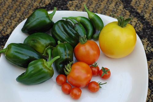 Harvest 7-29-10