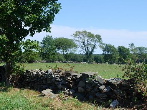 Watsons Farm landsape