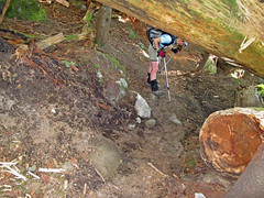 The phantom trail maintainer dug a handy tunnel under the huge log across the trail.