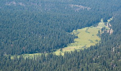 Wawona Meadow Photo