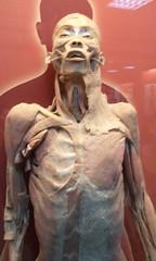 人体 解剖の壁紙プレビュー