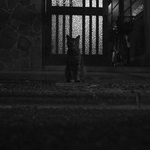Today's Cat@2010-08-04