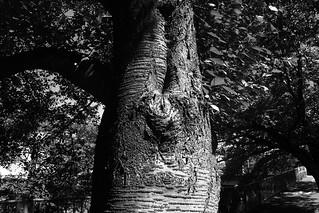 町田樹 画像73