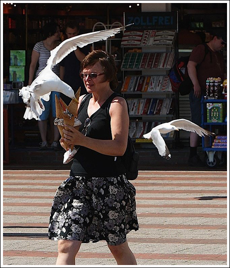 Seagulls-5