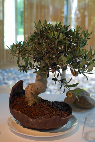 In an Olive Tree