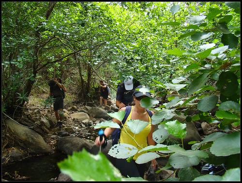 Arroyo de la Garganta del Espino (3)