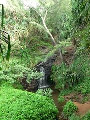 Falls Above Queens Bath (umotamba) Tags: beach hawaii hiking na northshore kayaking kauai tunnels pali hanalei kee haena
