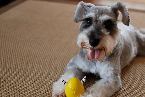 ugo & dog toy