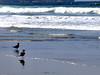 Two Seagulls (♥Br0wnEyez♥) Tags: ocean seagulls beach water birds challengeyouwinner