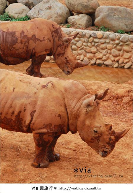 【新竹住宿】來去和動物住一晚~關西六福莊生態渡假旅館19