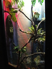 RGZ - Green Tree Python Exhibit (fkalltheway) Tags: newyork snake exhibit syracuse python adaptations greentreepython rosamondgiffordzoo fkalltheway