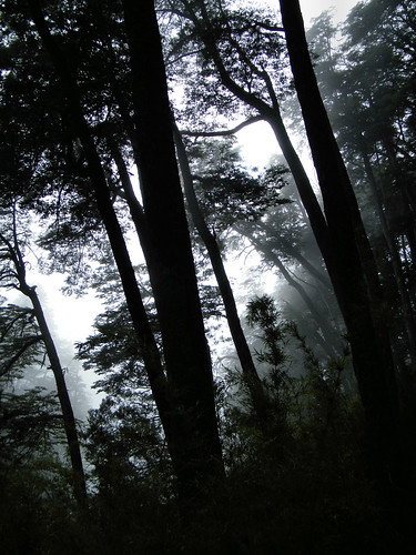 Misty Forest [Cascada los Alerces] by katiemetz on Flickr