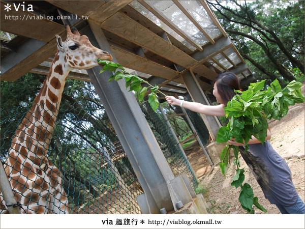【關西六福莊】精彩秘探野生動物園/DIY手作/農趣樂~!