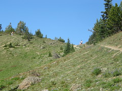 Looking up to Marmot Pass. I wouldn't be alone.