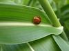 lato-b (fata_ci) Tags: macro verde nature estate natura insetti ysplix