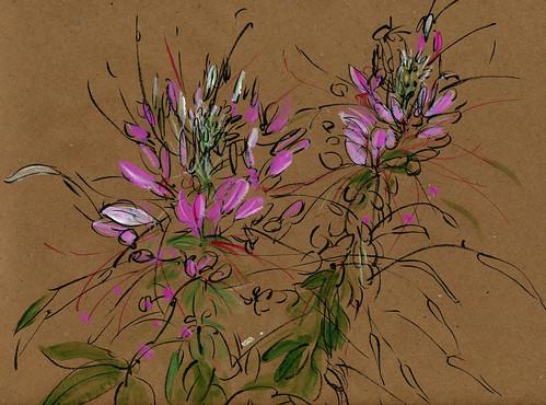 August garden: pink chleomes