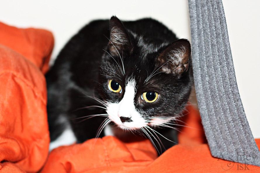 Closet Kitty Paw