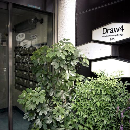Draw Four Bush
