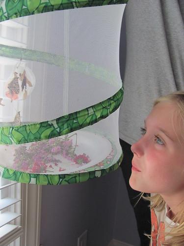 Admiring the Butterflies