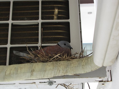 nesting in the AC
