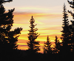 Looking towards the Sunrise (Colorado Sands) Tags: trees usa mountains nature silhouette america sunrise us colorado arboles unitedstates earlymorning silhouettes rockymountains silueta amerika bume siluetas montanhas mountevans rvores mtevans montagnes pokok silhuetas rockymountainhigh bumen montanhasrochosas sandraleidholdt leidholdt sandyleidholdt