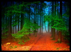 Morkeptz - in the morning (NPPhotographie) Tags: wood morning mist tree art nature fog forest woodland germany way path magic creative dust oberberg mystic enchanted specialpicture colorphotoaward theunforgettablepictures vanagram micarttttworldphotographyawards micartttt bestofmywinners theoriginalgoldseal michaelchee