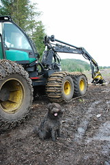 Timberjack 1470D (Mrtainn) Tags: dog chien skye co cane scotland highlands isleofskye alba forestry hond escocia perro hund pies kutya labradoodle alban szkocja hundur suns harvester pes esccia dougal schottland schotland ecosse anjing scozia kope timberjack skottland  koira skotlanti skotland koer broskos uo cine forstwirtschaft esccia anteileansgitheanach skcia foresterie albain skogsbruk iskoya c   lenictwo metstalous metsnhoito skrdare abatteuse  gidhealtachd buanaiche alltanavaig coilltearachd eileansgitheanach forstgerte forstwesen harwester  harvesteri  scoia skogindustri skogvesen hakkuukone 1470d timberjack1470d
