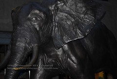 Tembo: Mother of Elephants