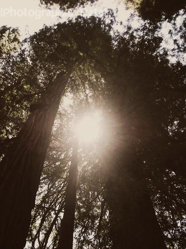 IAYH Trees