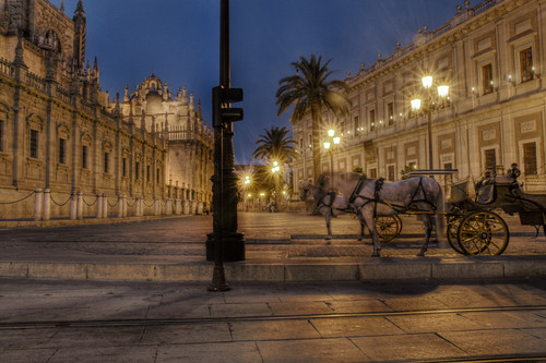 Horses by the cathedral. Seville. Caballos junto a la catedral. Sevilla.