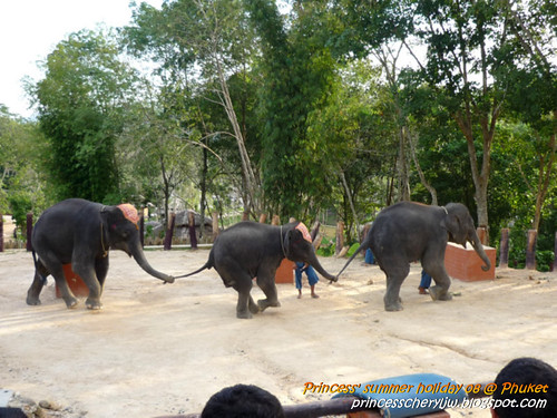 Elephant trekking & Safari 34