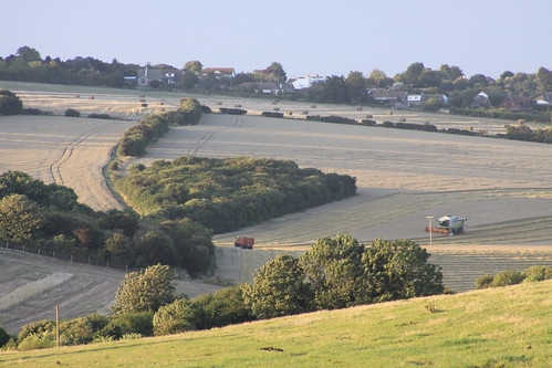 Summer evening walk: Harvest time at Kingsdown