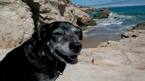 Mikey at Santa Cruz