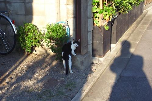 Today's Cat@2010-08-26