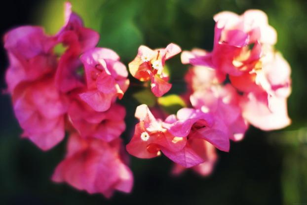 exotic pink 10
