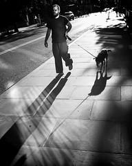 """Under a Blazing Sun, the Dog Will (Still) Be Walked"" (Sion Fullana) Tags: allrightsreserved sionfullana westvillage vintbwapp urbanshots urbannewyork urban throughthelensofaniphone streetshots streetphotography shadows photojournalism peoplewalking people nyc newyorklife newyorkers newyork journalistic journalism iphoneshots iphonephotography iphoneography iphoneographer iphone citylife characters beautifullight bw blancoynegro blackandwhite fantasticlight lightandshadows greatshadows cameraapp handsomeguy cuteguy cutebeardedguy bear cutebearguy walkingthedog leash dogsofnewyork manhattandogs iphone4 beard howmanydogsareinmanhattan doyoulikedogs doyouhavedogs wouldyouhavedogs"